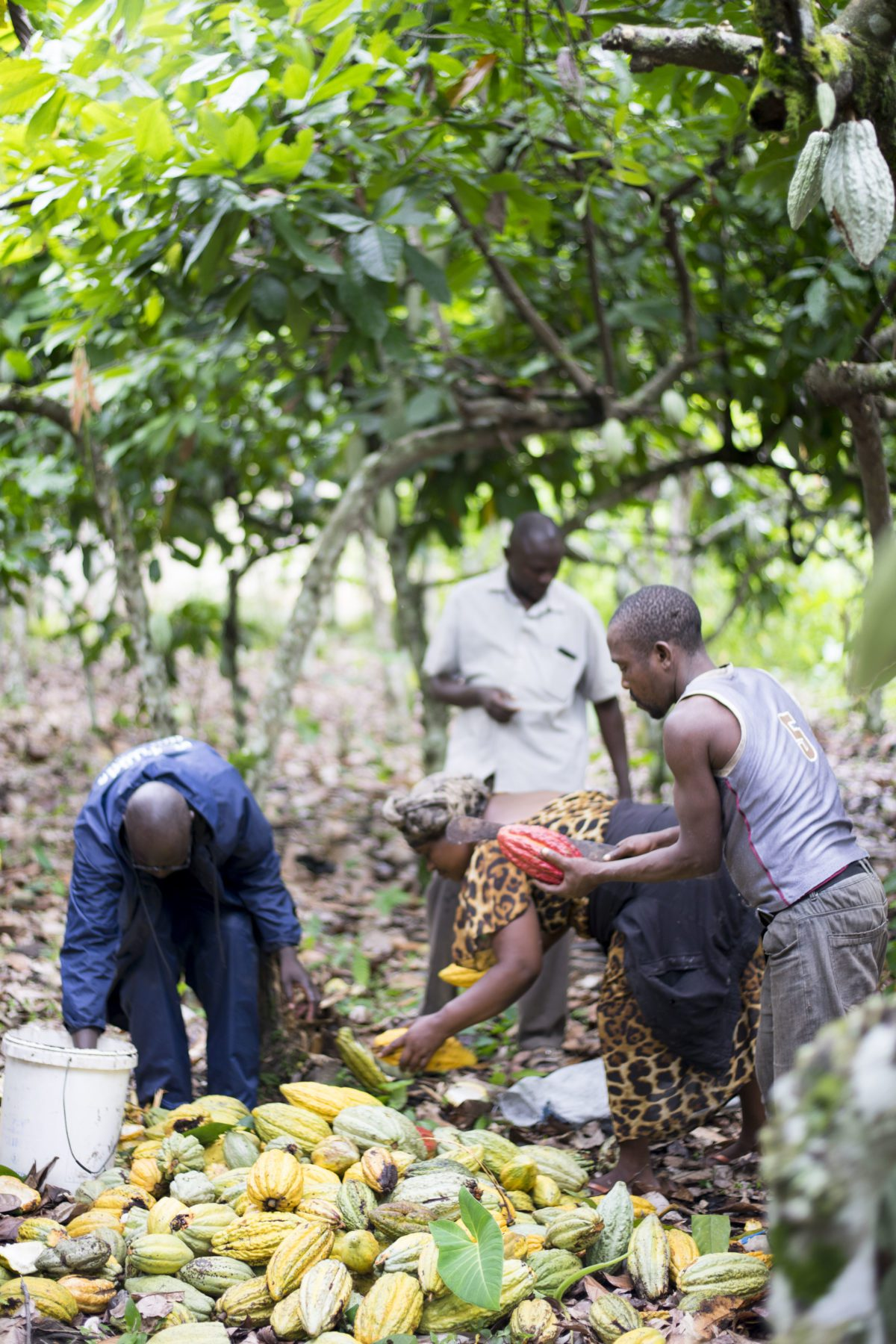 LATITUDE   Dunkle Schokolade »Semuliki - Uganda« 70%